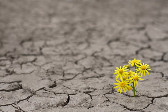 Flowers growing from dry dirt